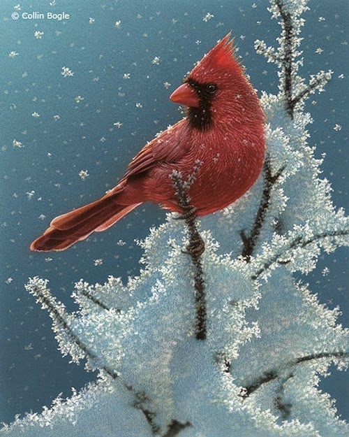 21-Cardinal-Collin-Bogle-Animal-Wildlife-in-Art-www-designstack-co