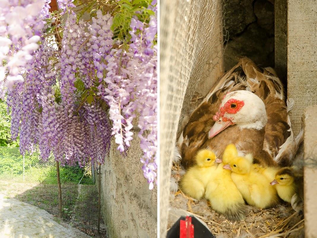 primvera - spring
