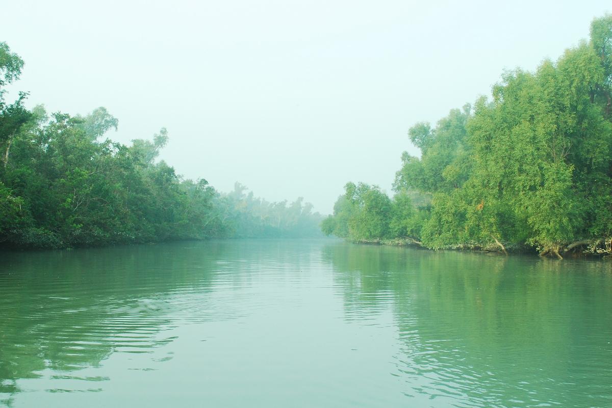 Sundarban Bangladesh Green Wallpaper