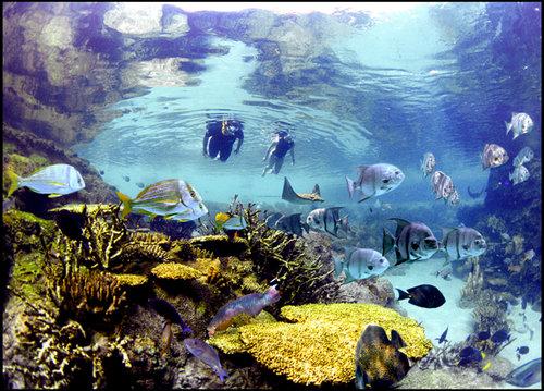 El Grand Reef