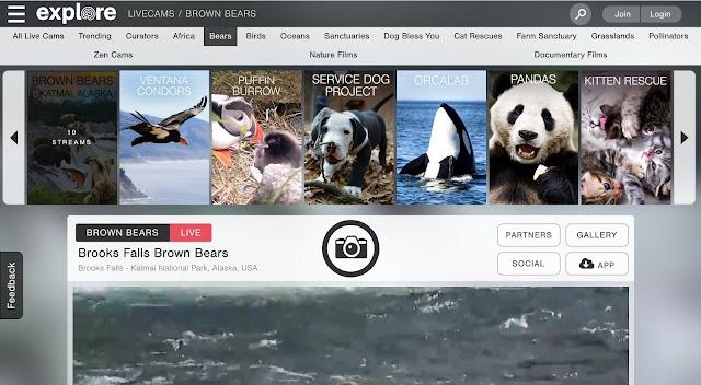 شاهد البث المباشر لحياة مئات الحيوانات حول العالم