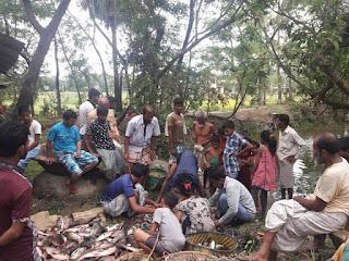 Bangladesh Fish Picture