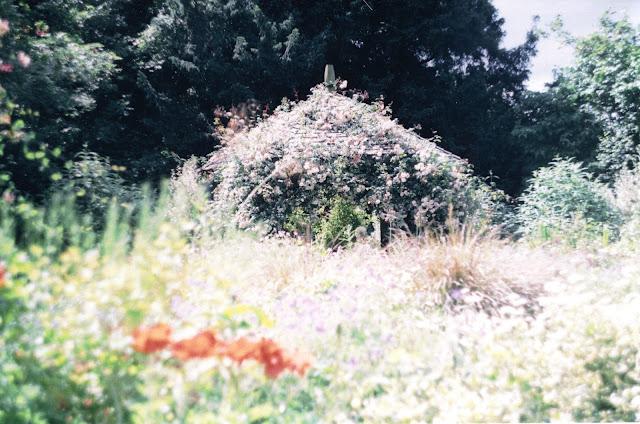 summer wild garden