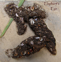 Cape otter left mussel shells