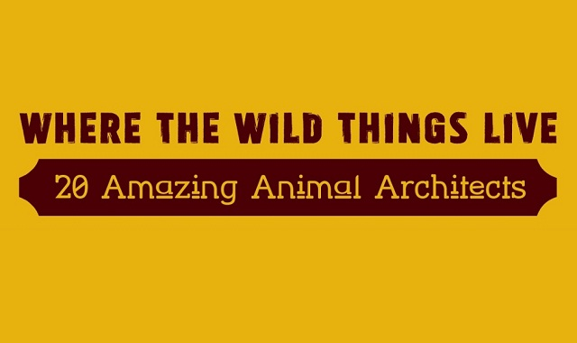 Where the Wild Things Live: 20 Amazing Animal Architects