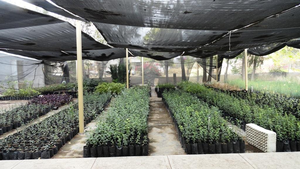 la grilla semae capacita a personal de viveros forestales