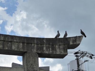島頭天満宮 鳥居 鳩