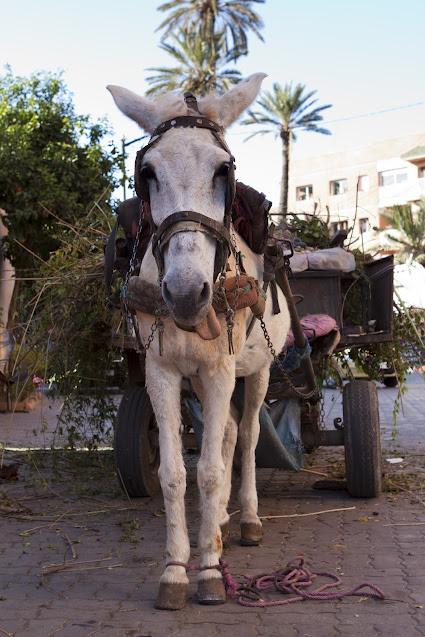 Carretto-Marrakech