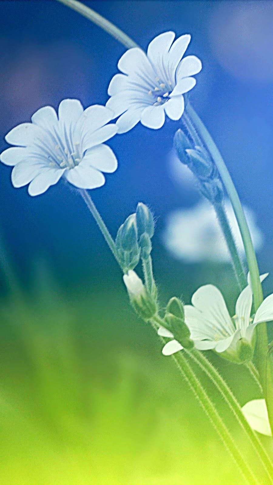 Free Wallpaper Phone Iphone 6 Plus Meadow Flowers