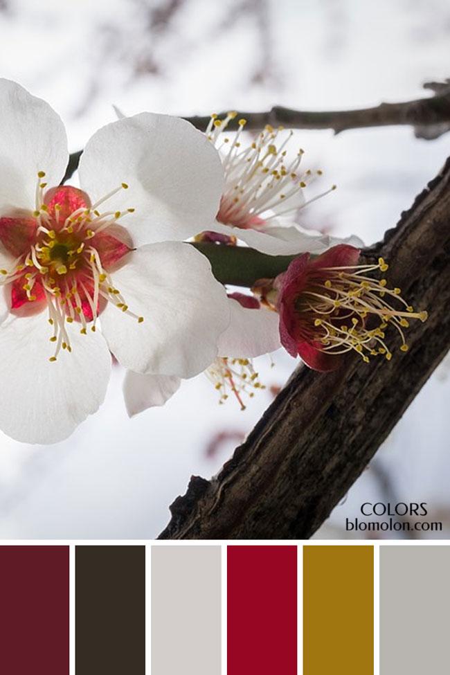 paletas_de_colores_21_variedad_de_color_3