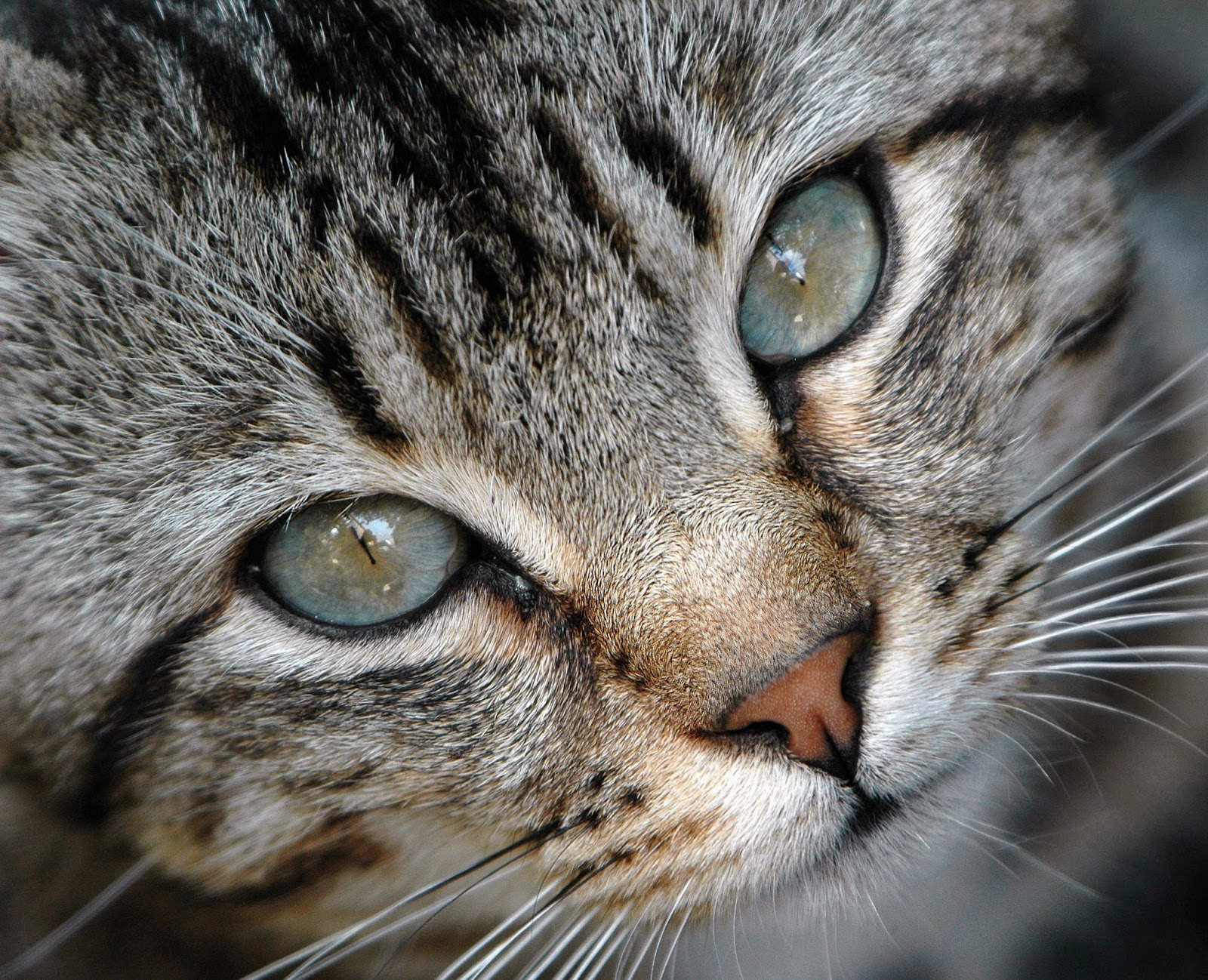 guide to choosing boy cat names boy and girl cat names and