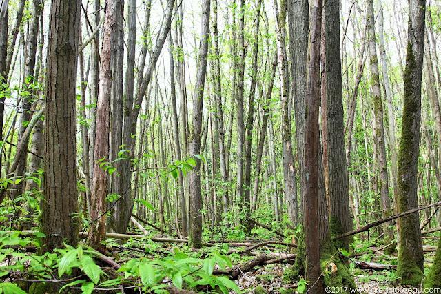 Les châtaigniers sont une des essences dominantes des vallées de l'Essonne