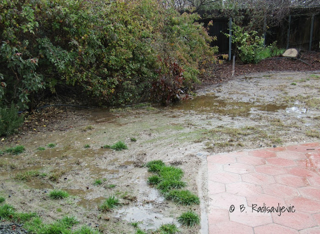 Rain, Rain, and More Rain in Paso Robles, January 2017