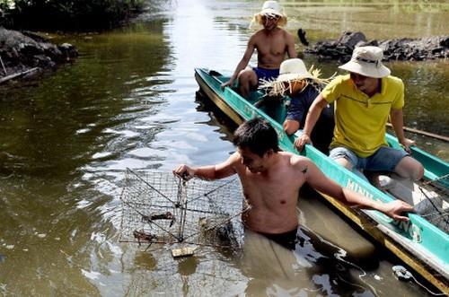 Đi bắt cá cùng người dân Cà Mau