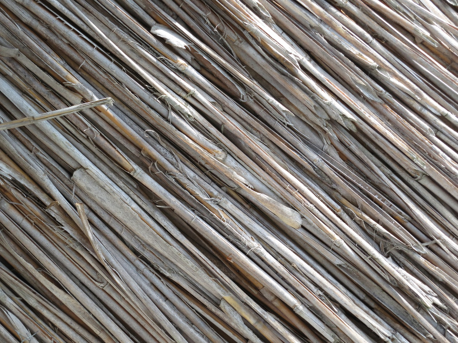 Close up of the reeds in a thatched roof.