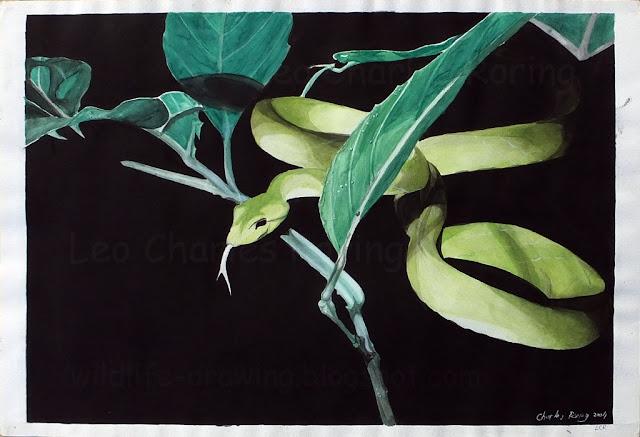 Green tree snake at night