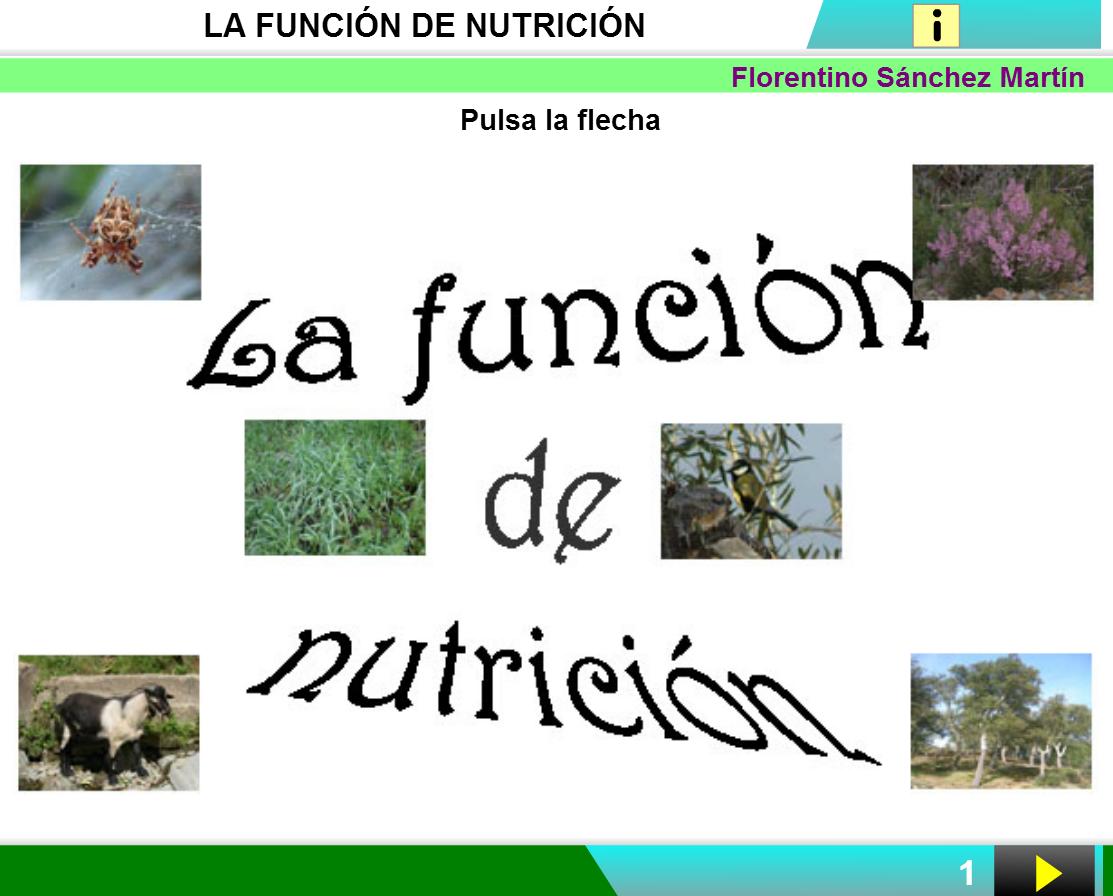 Resultado de imagen de funciones vitales de las plantas primaria