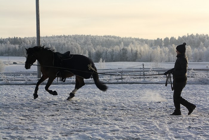 Hevosen Juoksutus