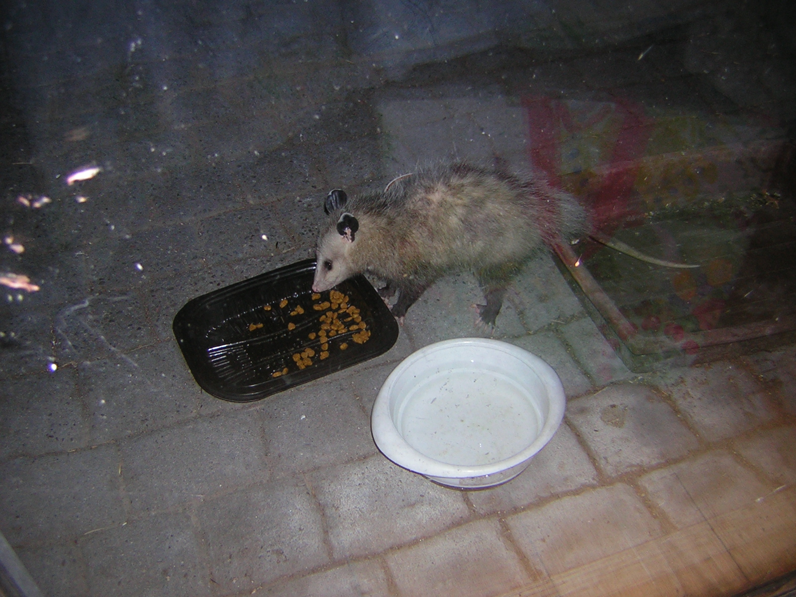 Terra Garden*: Wordless Wednesday: Possum