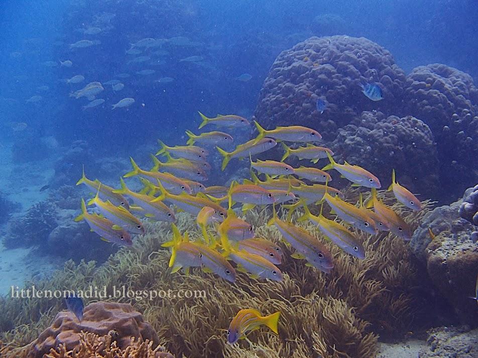 snorkeling peucang island ujung kulon national park