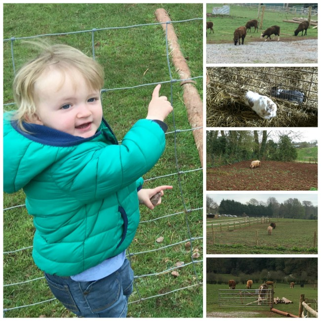 Puzzlewood In The Forest Of Dean - A Toddler Explores collage of a  toddler pointing at rabbits, cows, horses, a pig and sheep