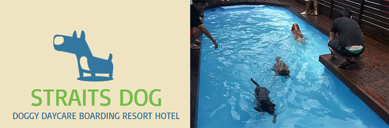 Dog hotel in Singapore