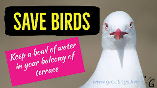 Save-birds-keep-water-birds-save-environment