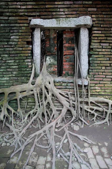 tainan treehouse