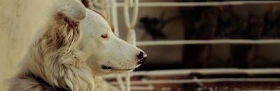 Salud perros mayores