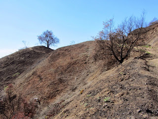 View west at Colby Fire damage on Colby Trail in Glendora