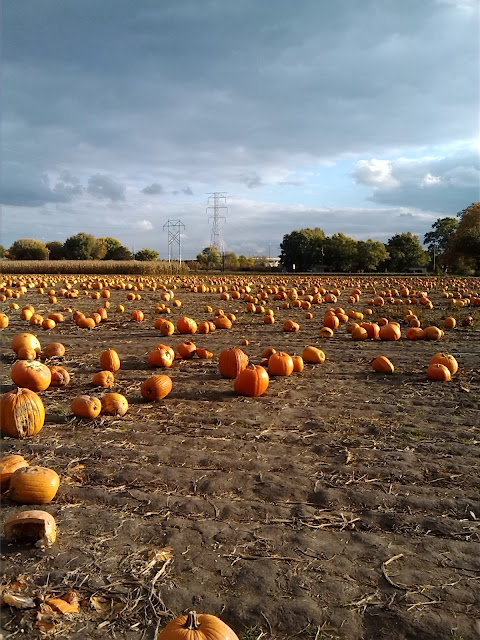 Pumpkin Patch Image for Download.