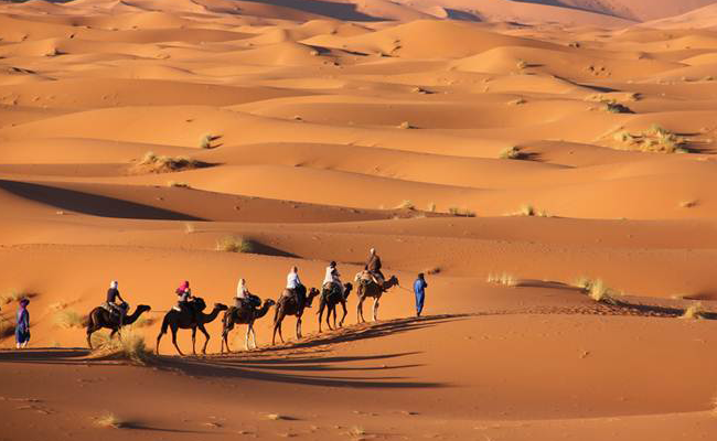 Gurun Arab Saudi