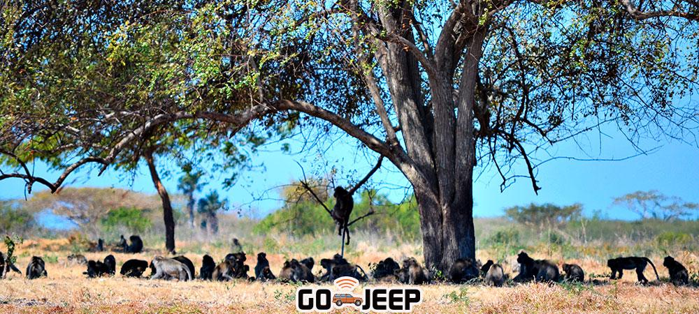 safari satwa di taman nasional baluran
