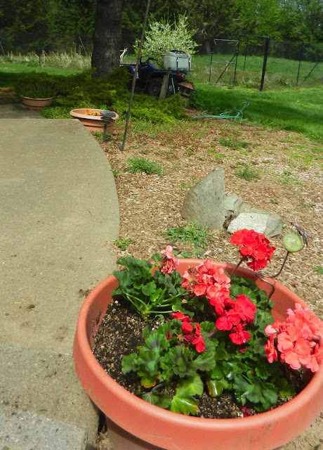 When can annuals be planted-9545