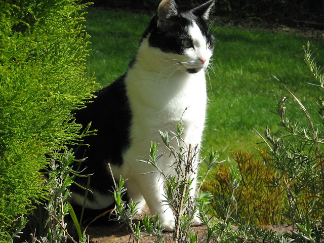 Our Jess looking good in the garden