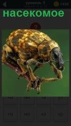 На картинке изображение некоторого насекомого на зеленом фоне с щупальцами и усиками