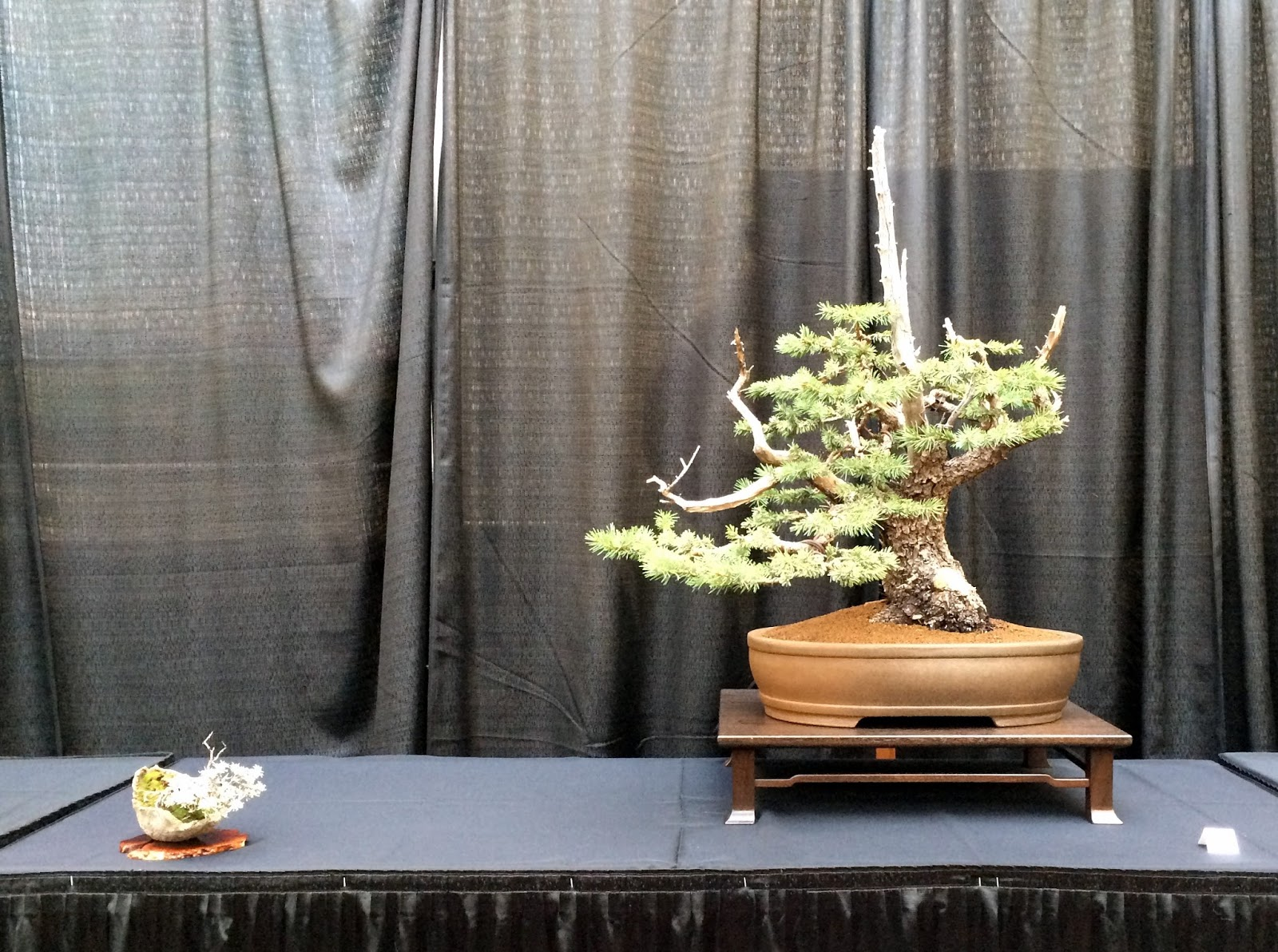 Nebraska Bonsai Society