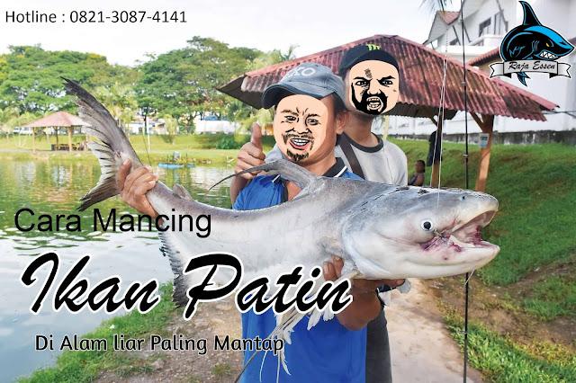https://rajaessentsm.blogspot.com/2018/11/cara-jitu-mancing-ikan-patin-di-alam-liar.html