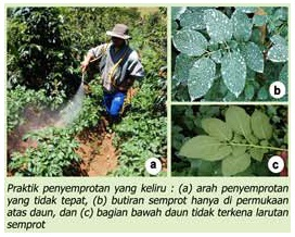 Teknik Penggunaan Pestisida Yang Baik Dan Benar