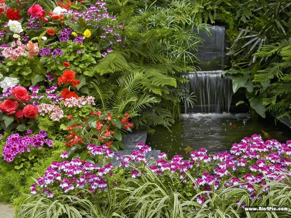 Fotos de casas im genes casas y fachadas fotos de - Plantas de jardin fotos ...