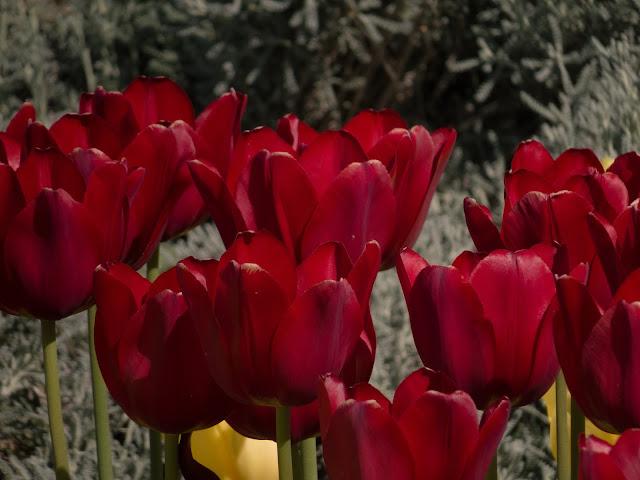 Севастополь фото весна