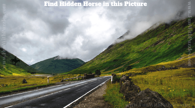 This is the picture puzzle in which your challenge is find the hidden horse