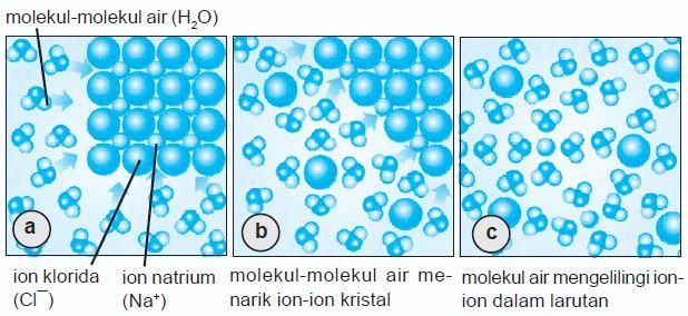 a. Molekul-molekul air (H2O), ion Na+ dan ion Cl¯. b. Molekul-molekul air menarik ion-ion dari kristal. c. Molekul-molekul air mengelilingi ion-ion dalam larutan.