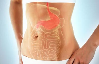 Origen enfermedades gastrointestinales