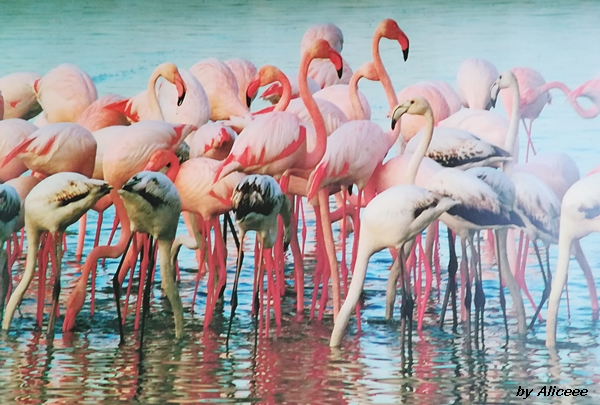 flamingo-larnaca-lac-sarat-impresii