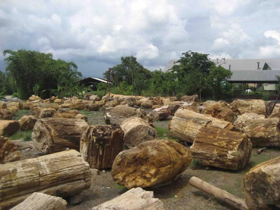 Handicraft Wood Fossil Petrified Wood