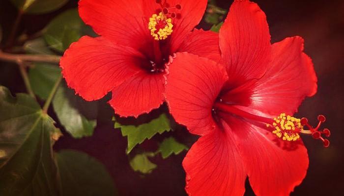 Arbol de flores para jardin