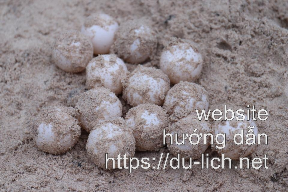Mùa rùa đẻ trứng