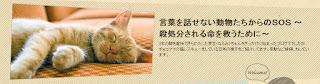 http://neko-chan.net/