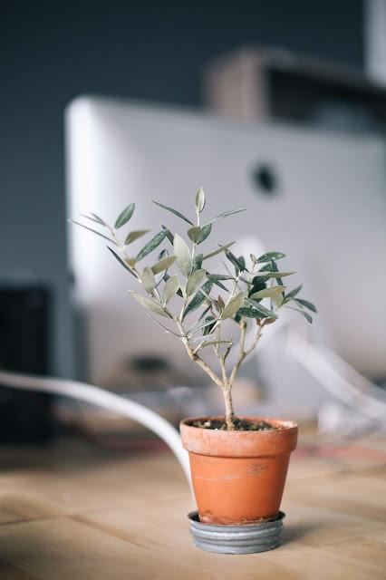 clay pot terra cotta plant leaves
